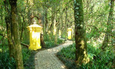 Bosque Foto. Wikipedia