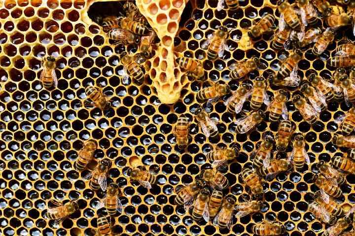 Colmena de abejas. Foto Pixabay.