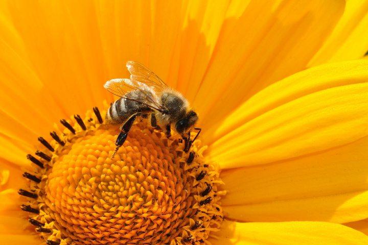 Debemos cuidar a las abejas. Foto Katja.