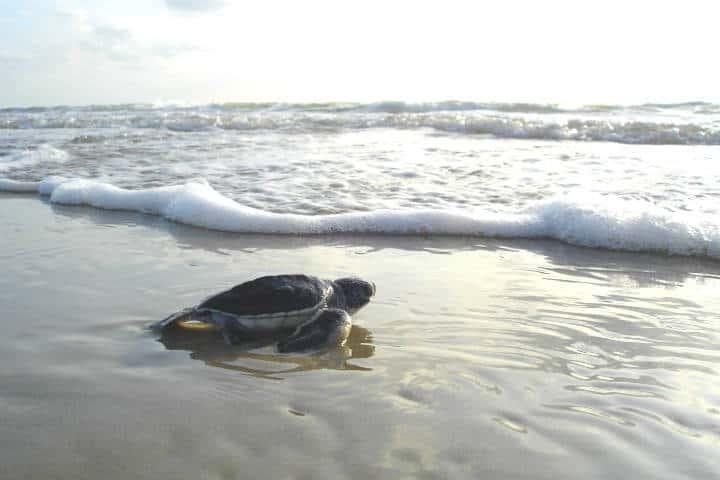 Dry tortugas National Park en Florida. tortuga. Imagen National Park Service