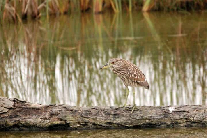 McAllen South Padre Island Foto SPI Birding & Nature Center