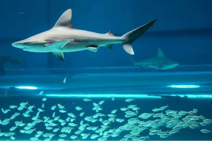 McAllen Viajes Cortos Foto Texas State Aquarium