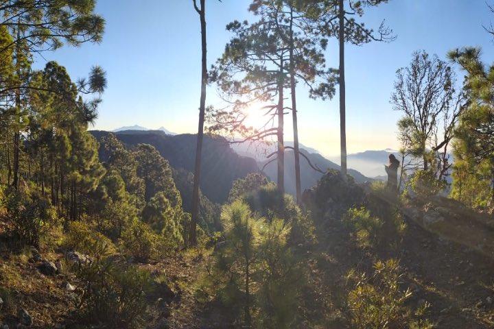 Parte alta de la Reserva de la Biósfera Sierra de Manantlán. Foto Wikipedia