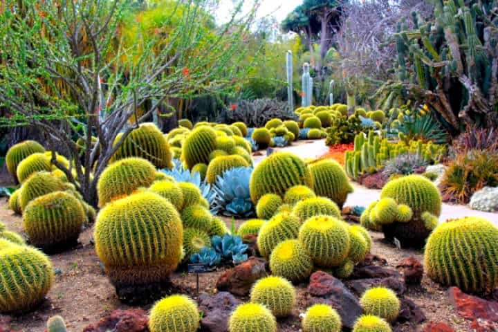 Phoenix Desert Botanical Garden Foto Inspirock