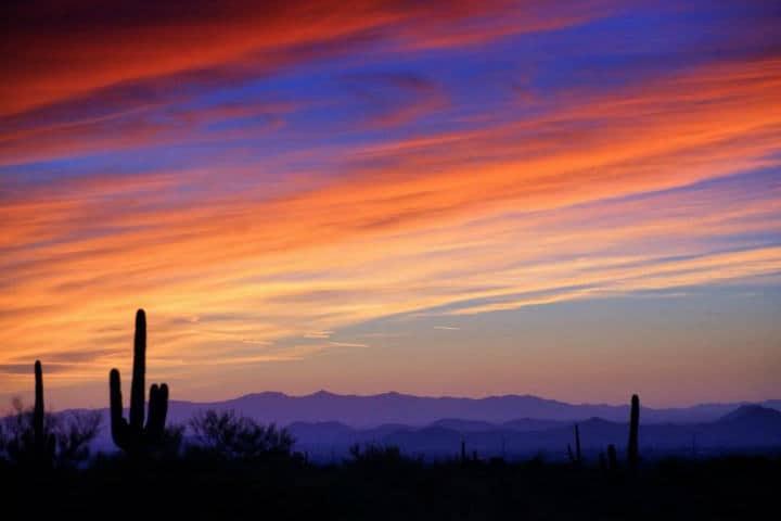 Phoenix Foto Shutterbug