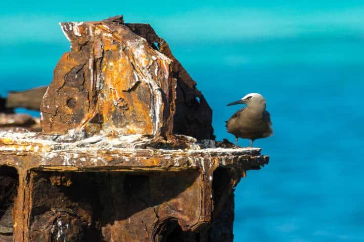 Rusty Bird. Foto Thomas