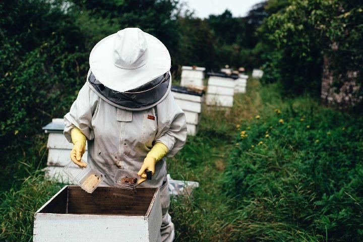 Ruta de la Miel en Tlaxcala, apicultor. Foto Pexels.