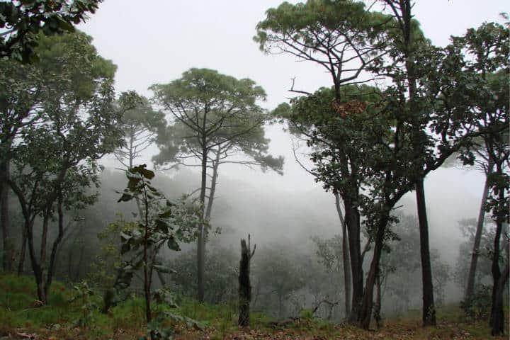 Sierra de Manantlan Foto Conanp 2