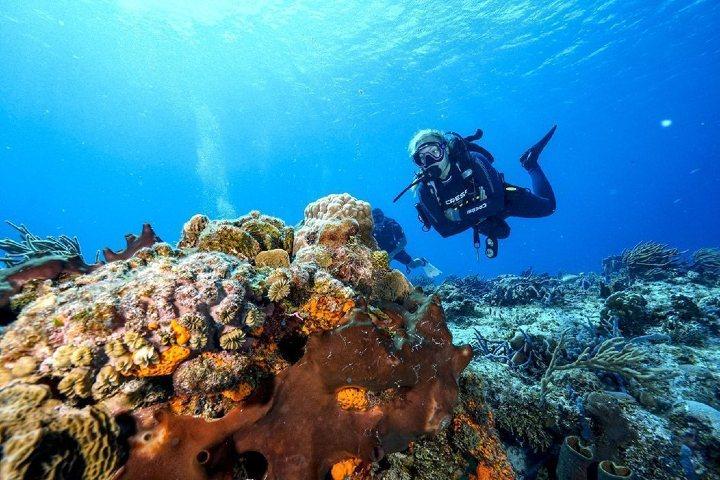 Vive un espectáculo Fluorescente, Foto_ aha scuba diving