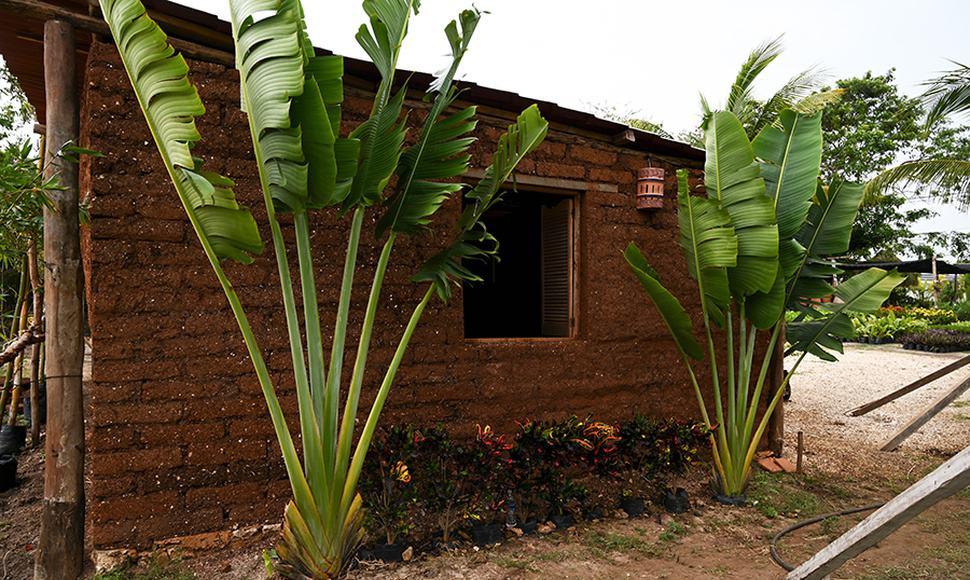 ¡Casas y edificios hechas de sargazo! Foto de New Dario