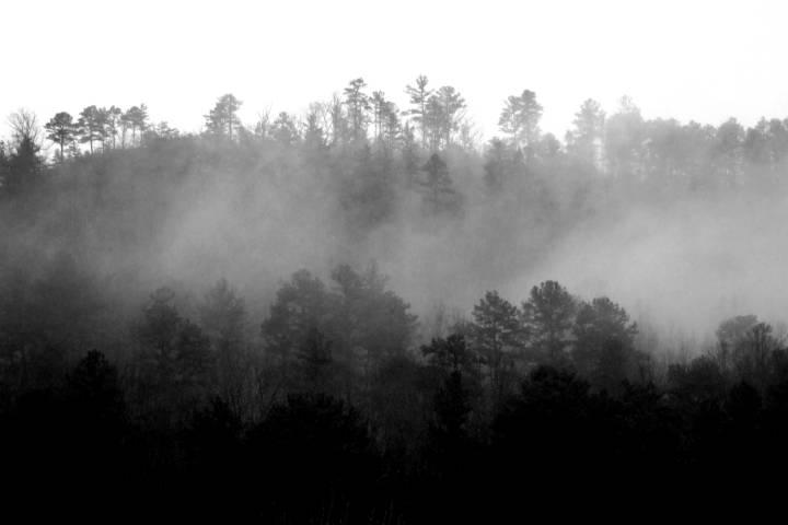 Bosque de niebla Foto Brett Davis
