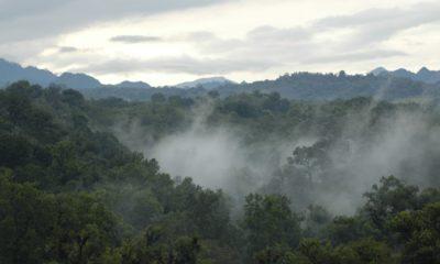 Bosque de niebla en Veracruz. Foto_ Las Cañadas