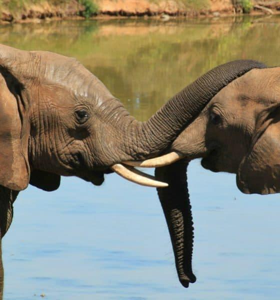 El safari más grande de México Foto. Pixabay