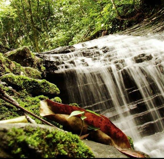Agua Selva, una gala Foto. Flickr