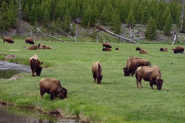 El tesoro de Yellowstone