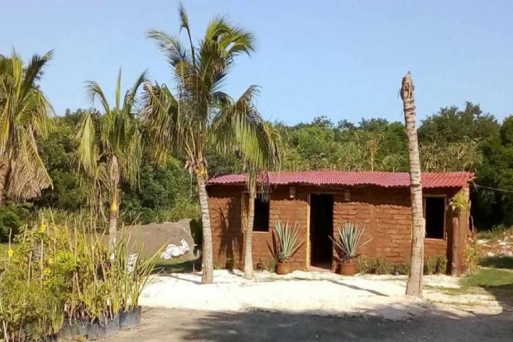 GoBizNext Foto: Casas y edificios hechas de sargazo