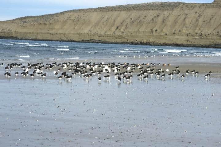 Guaymas el desierto, el mar y la montaña en un solo paisaje Foto de avesgolfo