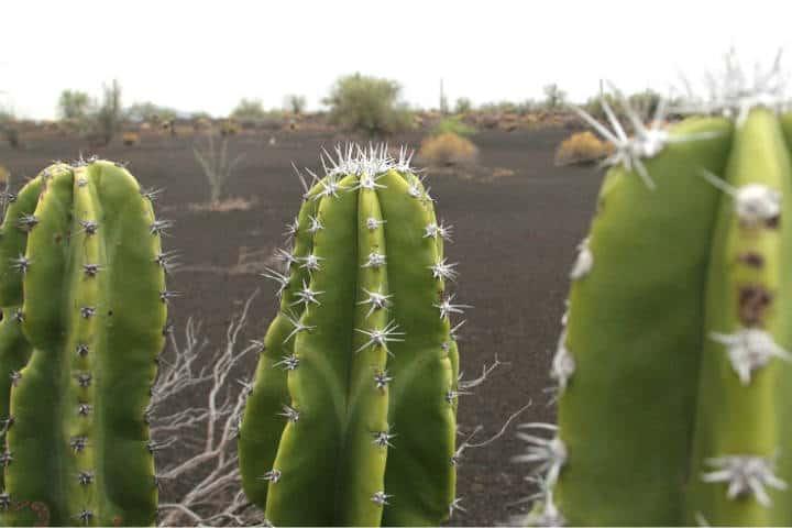 Guaymas el desierto, el mar y la montaña en un solo paisaje. Foto de Visit Mex