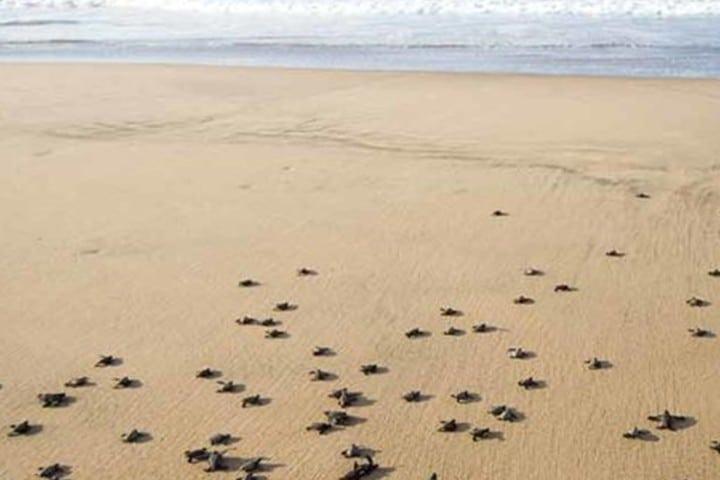 Liberación de tortugas. Foto Playa Viva.