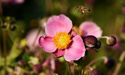 Senderos de flores silvestres. Foto.Pixabay