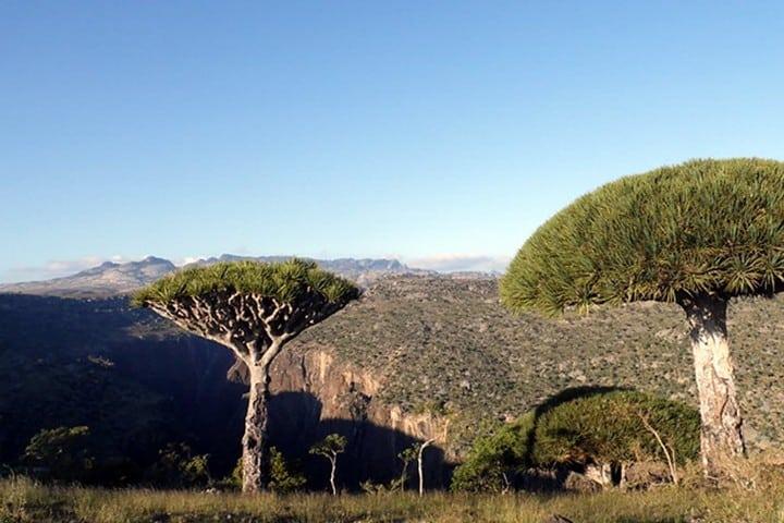 Socotra. Foto Matthew J. Fecteau..