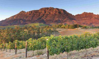 Trip Savvy Foto: región vinícola más grande de Sudáfrica