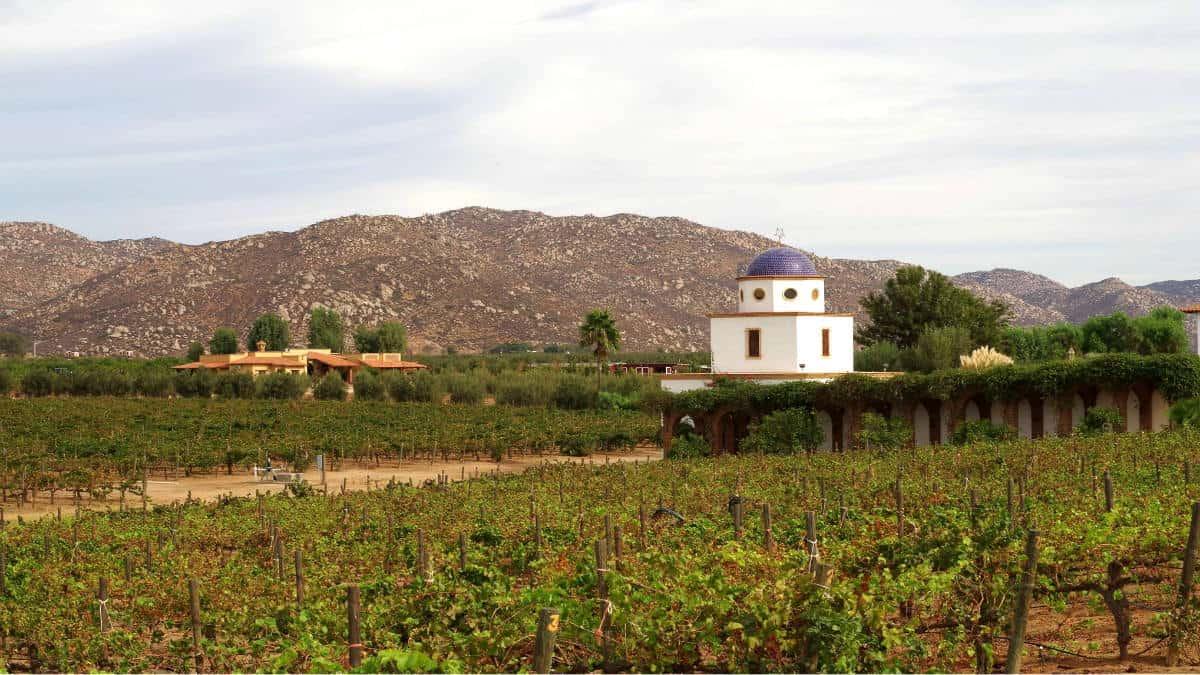Vinos mexicanos premiados en el mundo. Foto: Hector de la Toba