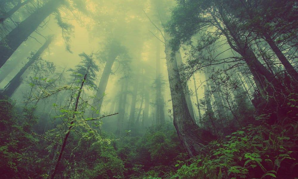 Visitar un bosque de niebla Foto.Pixabay