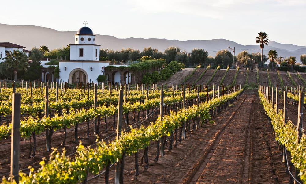 Top 10 de los vinos más premiados Foto-Wikpedia