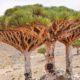 Socotra, un lugar en el mundo Foto. El souvenir