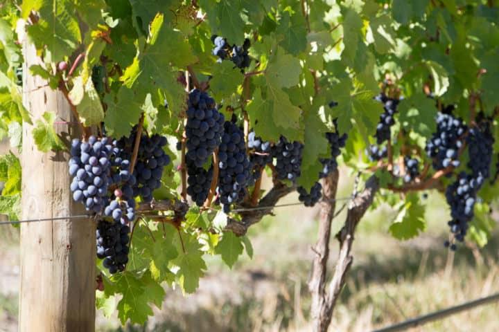 región vinícola más grande de Sudáfrica. Foto El viajero feliz
