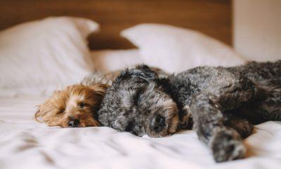 ¡Tu mascota puede ser un crítico de hoteles! Foto. Pixabay