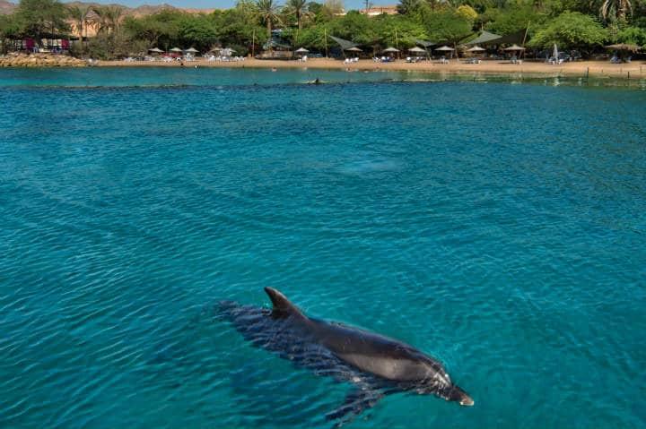 Dolphin Reef, una aventura con delfines Foto Israel Photo