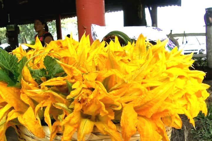 Alimentos Mexicas Flor de Calabaza Foto Jaime Ramos