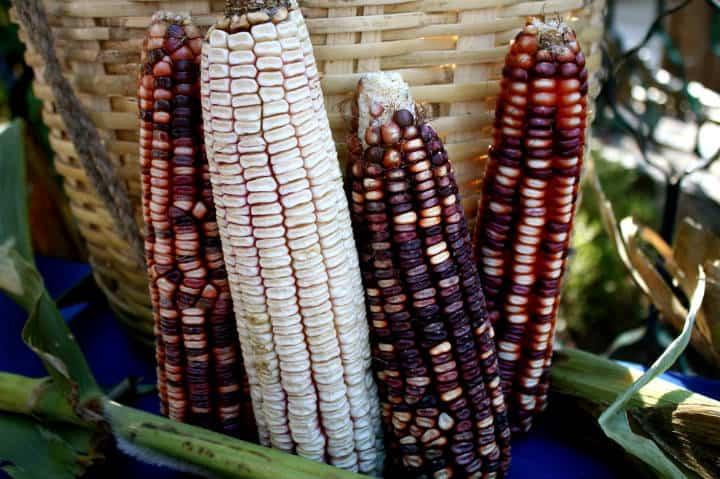 Alimentos Mexicas Maiz Foto Arpan Dasgupta