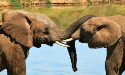 Bioparque estrella el safari más grande. Foto Pixabay.