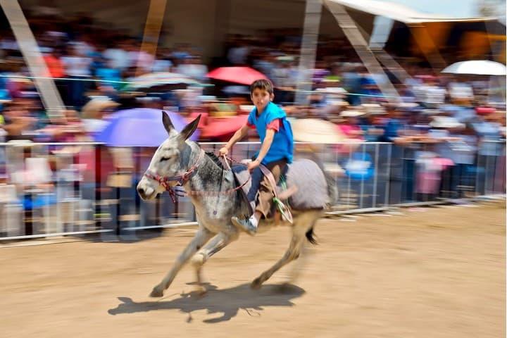Carrera de Burros... Feria Internacional del Burro... Otumba, EDOMEX 2017...