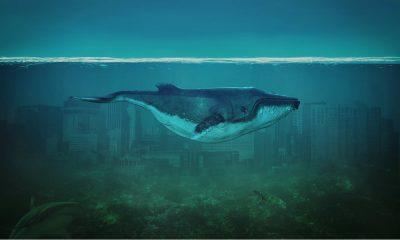 Ciudades bajo el agua que puedes explorar Foto. Pixabay