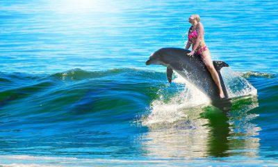 Dolphin Reef, una aventura con delfines Foto. Pixabay
