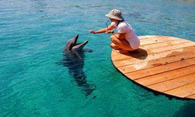 Dolphin-Reed-una-aventura-con-delfines-Foto-Tourist-Israel-1
