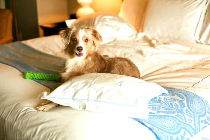Tu mascota puede ser un crítico de hoteles Foto Y Nakanishi