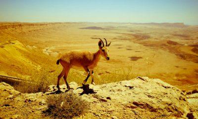 portada Desierto de Négev en Israel Foto Pxhere