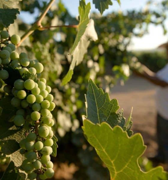 3 de los mejores viñedos de México Foto. Visit México