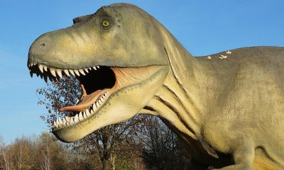 4 lugares para ver dinosaurios en CDMX Foto