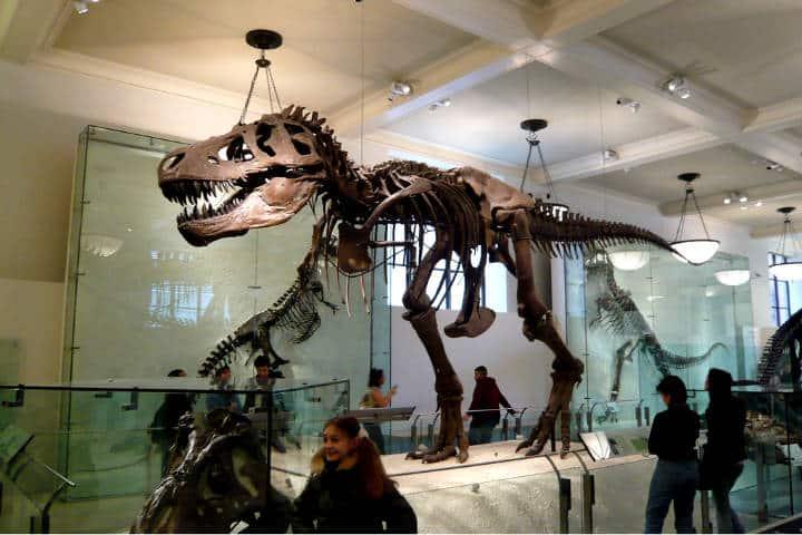 4 lugares para ver dinosaurios en CDMX Foto David Basulto