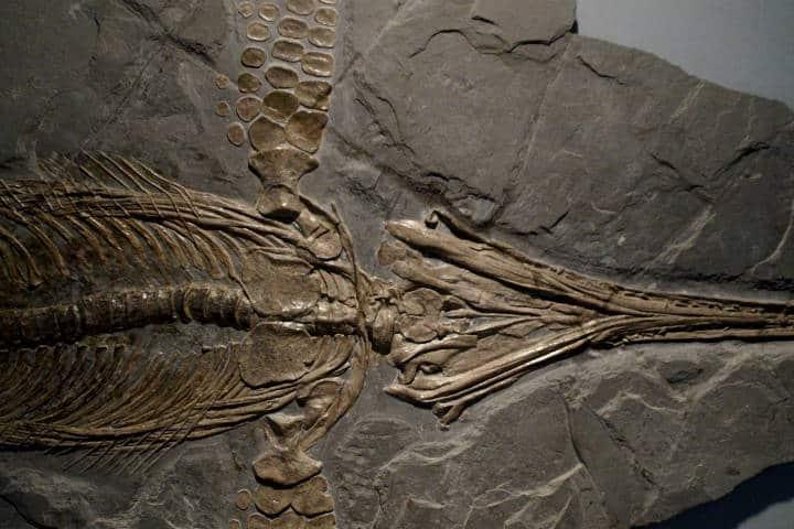 4 lugares para ver dinosaurios en CDMX Foto Museo de Geología