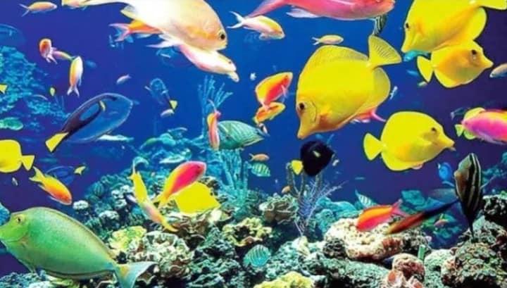 Arrecife Roatan Foto Islas de la bahia Honduras