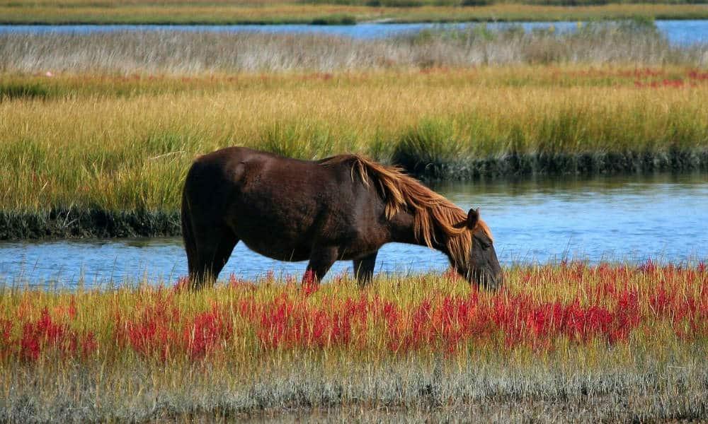 Doñana, la reserva natural más importante de Europa Foto. Pixabay