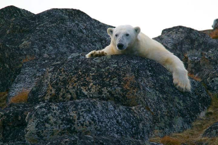 Observación de fauna en Columbia Británica Canadá. Foto: Andy Brunner