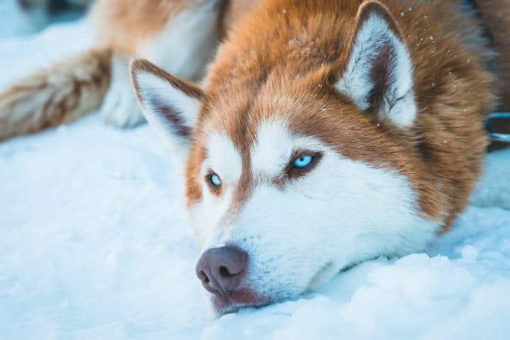 Observación de fauna en Columbia Británica Canadá. Foto: Simon Rae